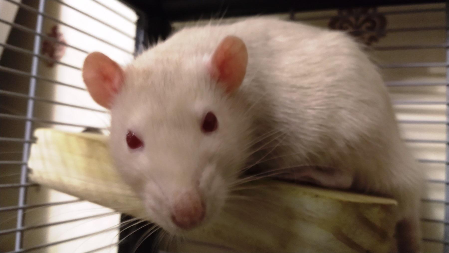 Derek, resting after eating, Dec 2019.