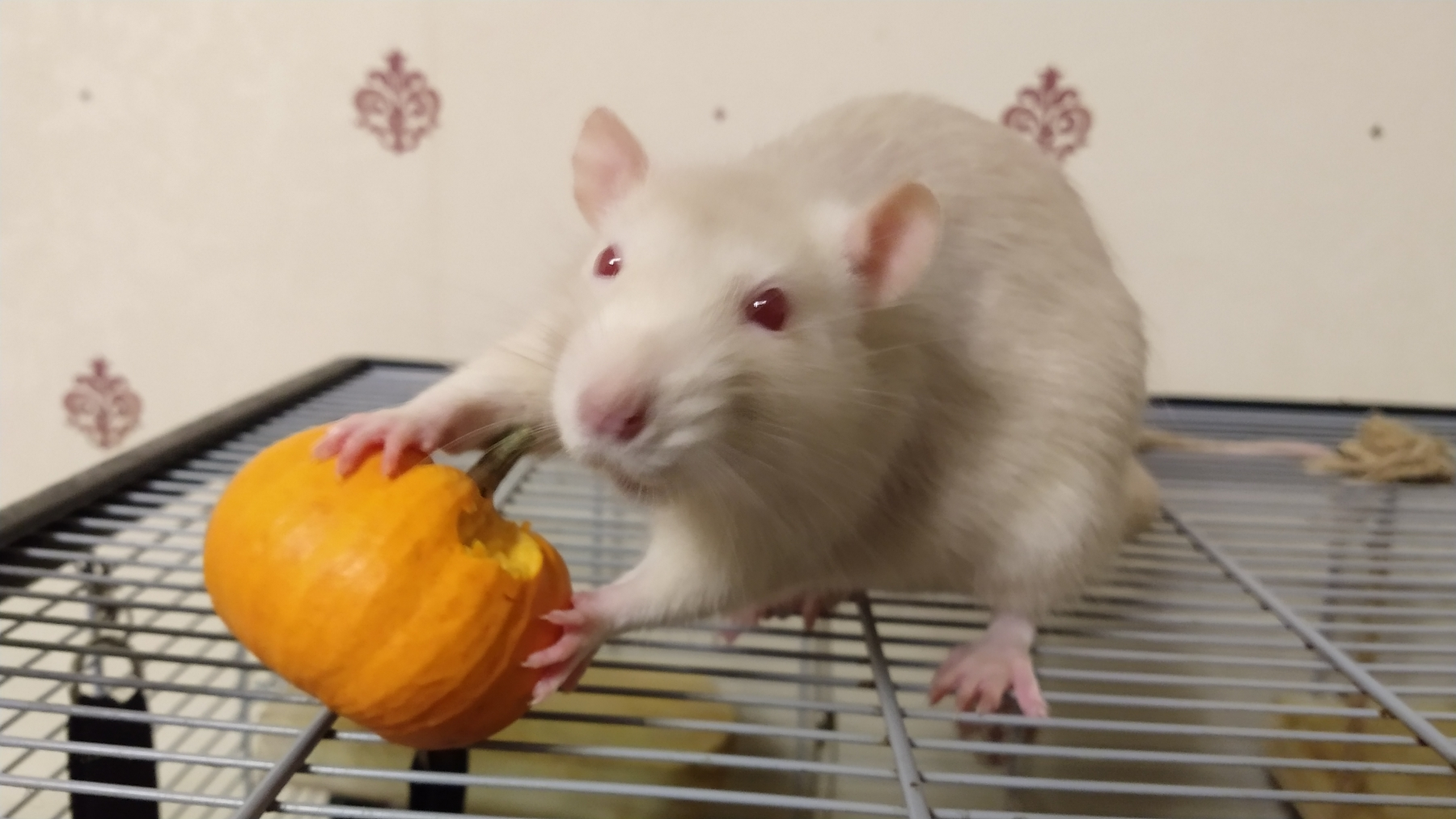 Derek and his pumpkin, Oct 2019.