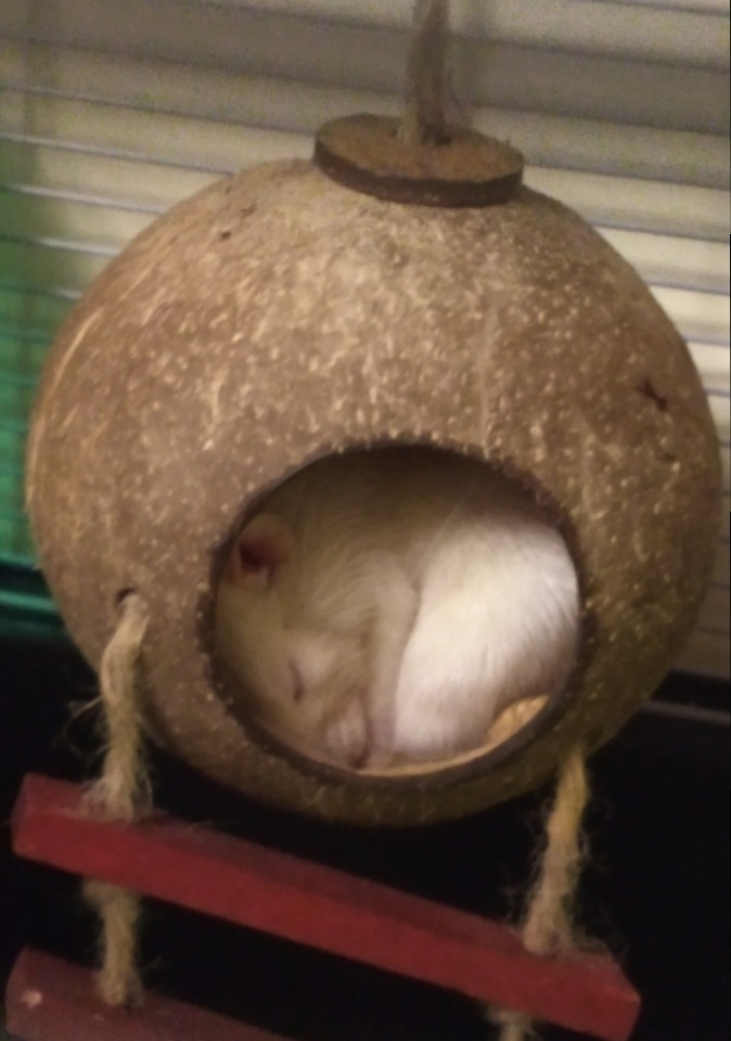 Derek asleep in the shell, Apr 2019.