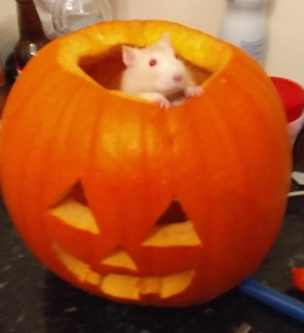 Derek in a pumpkin, Oct 2019.