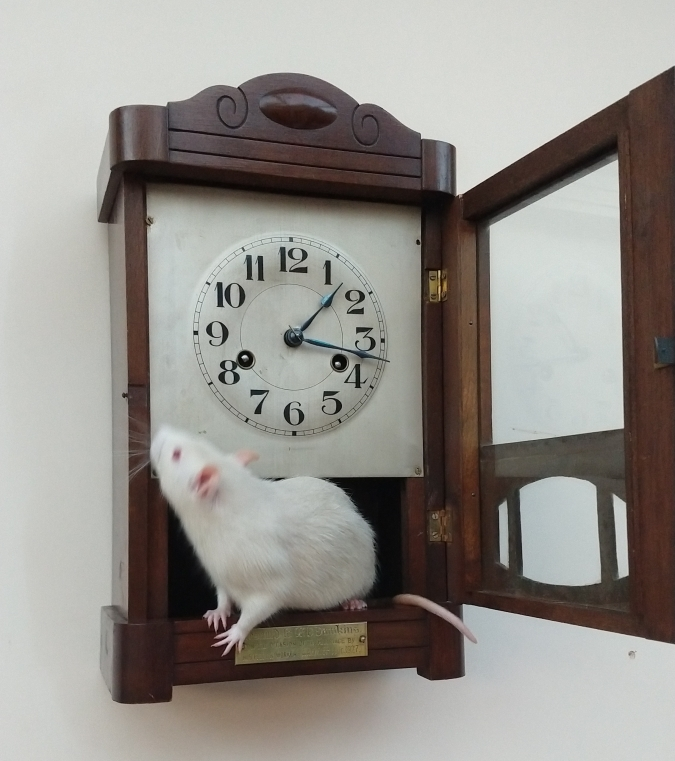 Derek ran up the clock, Jun 2019.