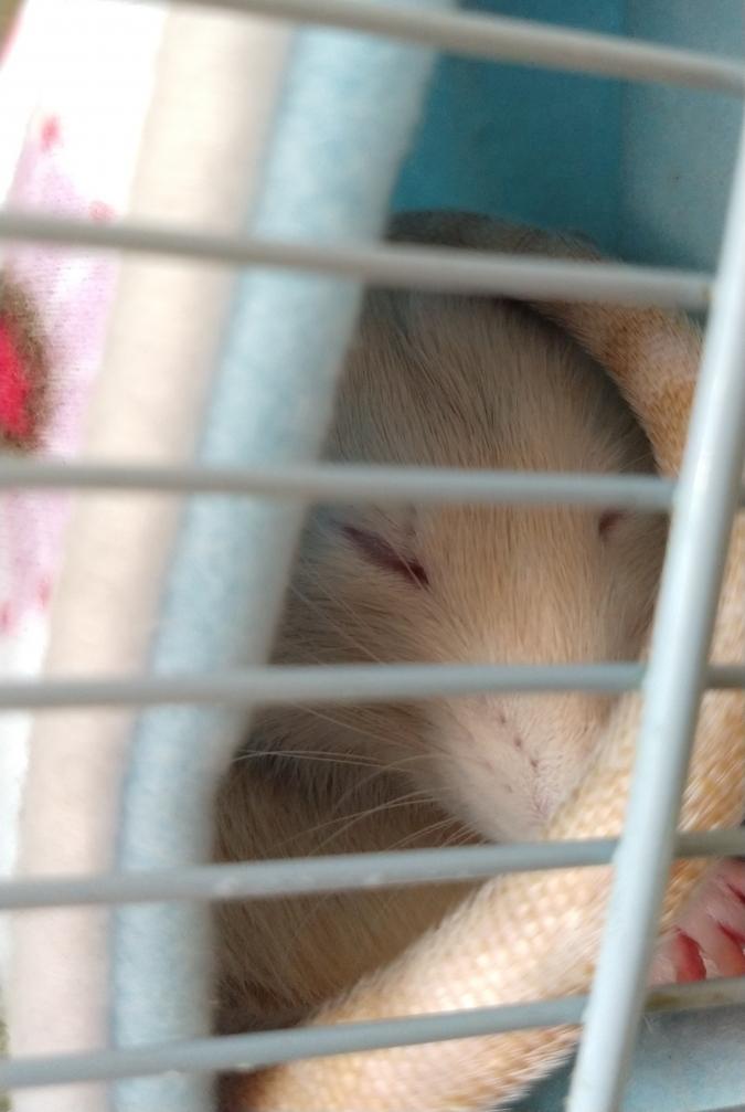Sleepy in the tube, Oct 2019.